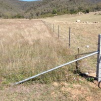 Fenced native pasture - North East CMA