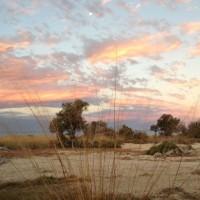 GAB mound springs Egbaston Reserve - Bush Heritage Australia