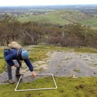 Southern Shepherd's Purse monitoring - Mount Alexander Regional Park