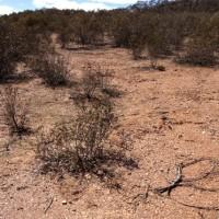 Denuded Mallee Eucalyptus Oil harvesting slope