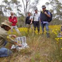 Industry Native Grass ID Course 2012, Paul Foreman with Plant Press